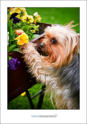© Repose Photographics 2012 | by reposephotographics - pet photography