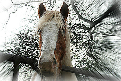 Why the long face... | by Bob T...