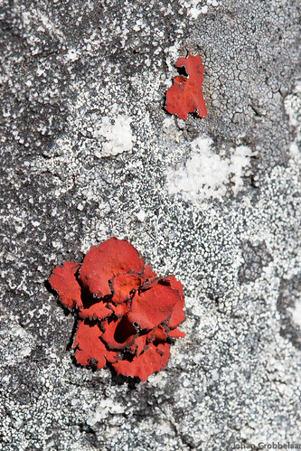 Red Lichen | by Johan Grobbelaar