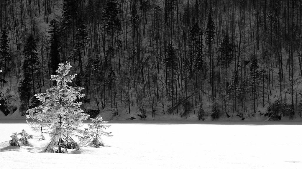 Image result for snow thomas riecken