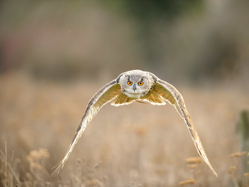 The Barn Owl Centre 20120219 0698 D700 | by Andy Gaffey