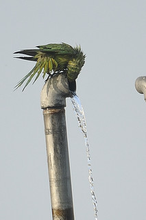 Enjoying a shower | by Prerna02