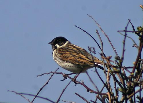 Twig And Sparrow Cafe Menu