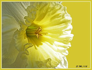 Narciso | by Laralucy