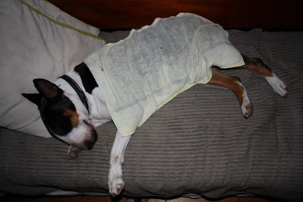 Nettie Under Wet Towel To Keep Her Cool On Very Hot 40 De Flickr
