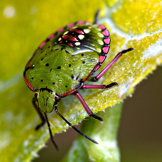 Groovy green Vegetable bug #1 | by p1ggyw1g