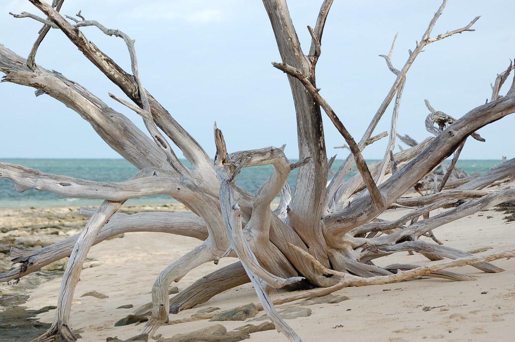 Australia / Great Barrier Reef / Green Island - 10