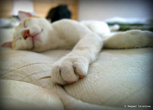 Good dreams | by Raquel Cristina (Now, mother of two cute kittens)