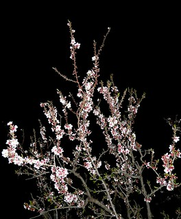 Night Blossom | by BITH*