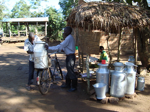 Selling milk by the road in Tanzania