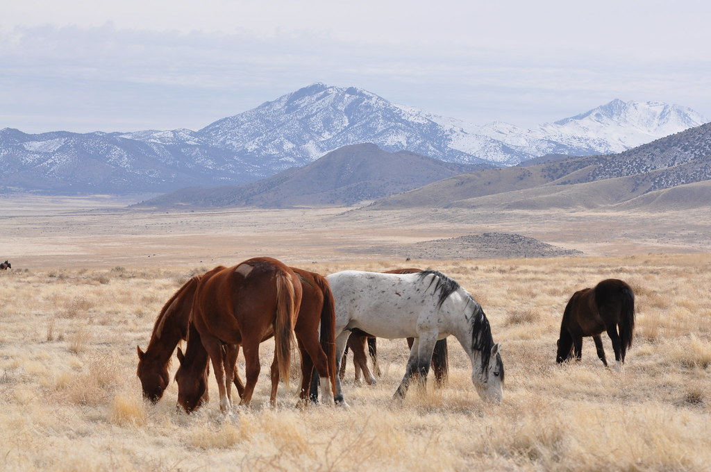DON'T MISS THESE FIVE OUTDOOR ADVENTURES IN TOOELE COUNTY, UTAH