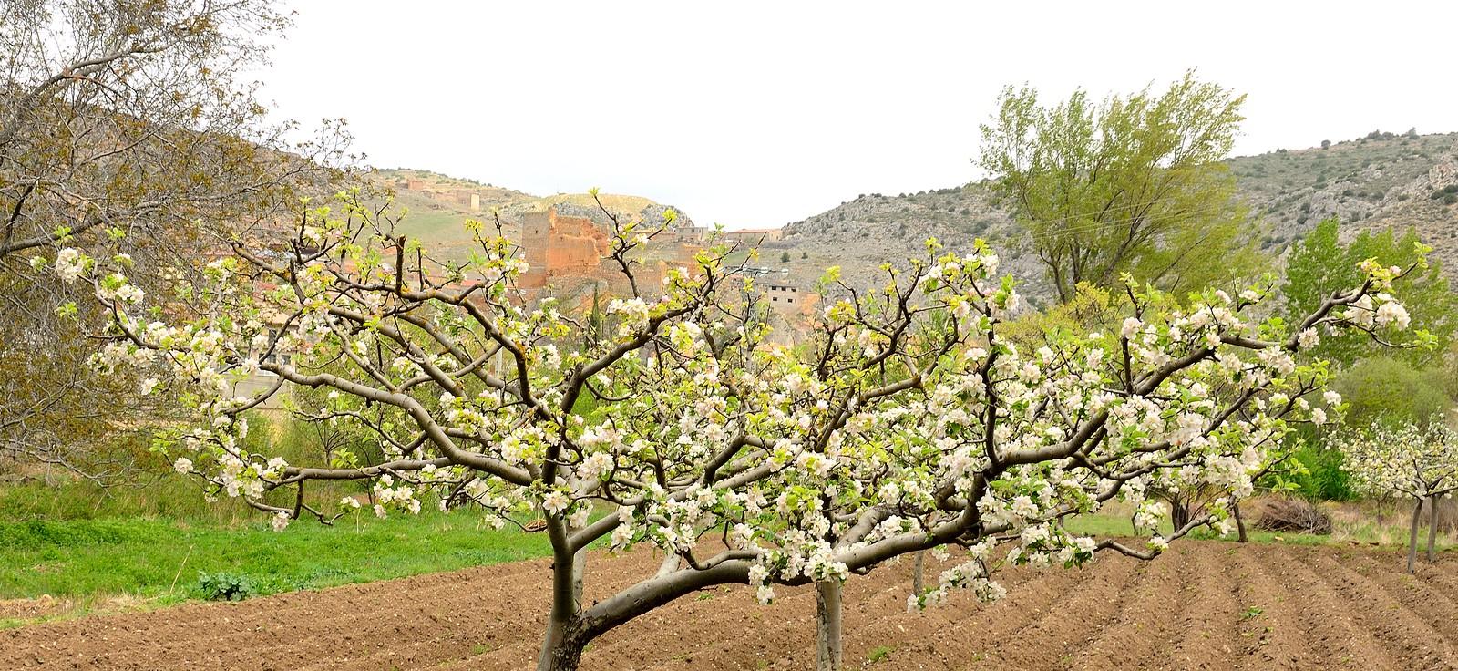 La vega de villel de mesa en primavera flickr for Villel de mesa