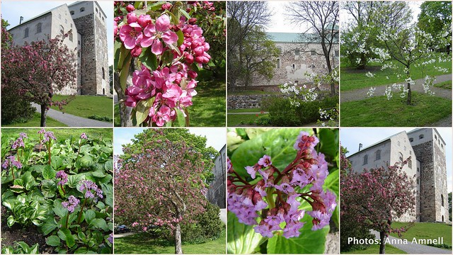 Spring, Turku Castle, May 25th