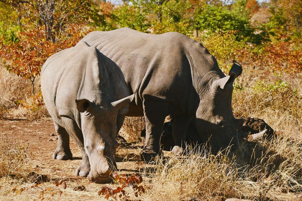 safari59
