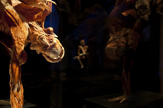 Body Worlds | by Oregon Museum of Science and Industry— OMSI
