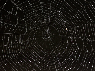 Spider Web 0143 April 7 | by d-russell4213