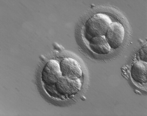 Early human embryos | by ZEISS Microscopy