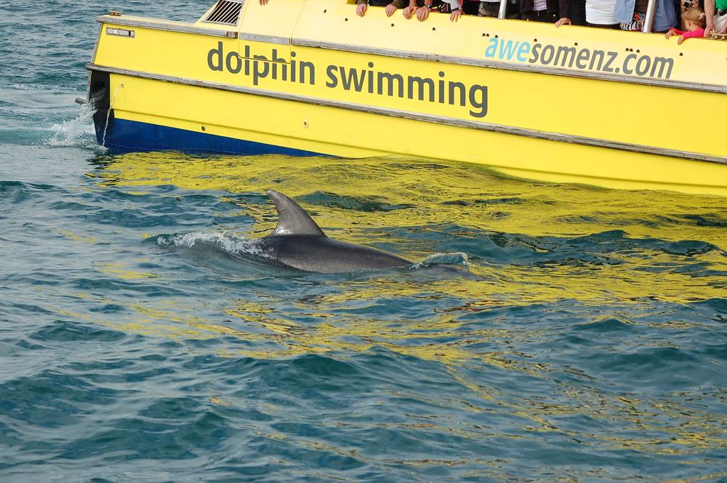 2009 Jan NZ Dolphins 030
