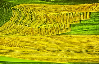 Palouse harvest tracks abstract. Picture was taken from Steptoe Butte, Washington. | by lennarteedvinson photo,
