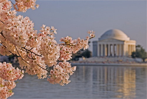Cherry Blossoms and the Jefferson Memorial -- Washington (DC) March 2012 | by Ron Cogswell
