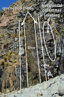 310312-maccullochs-fossil-tree-annotated | by treeblog
