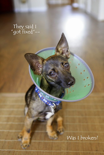 Post Neuter Puppy. | by shauna f.