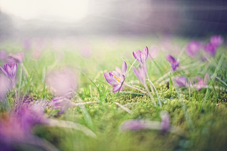 A touch of spring II | by c.r.photoholic
