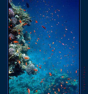 Snorkeling in Red Sea | by Jambo Jambo