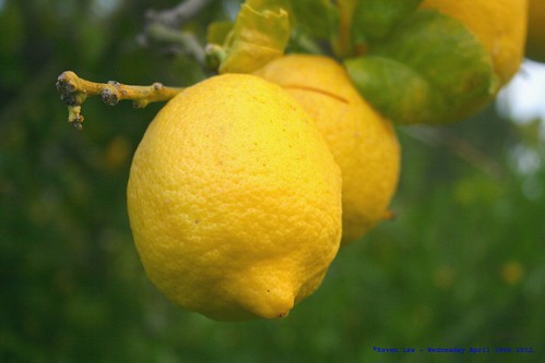 When Life Gives You Lemons.... | by law_keven