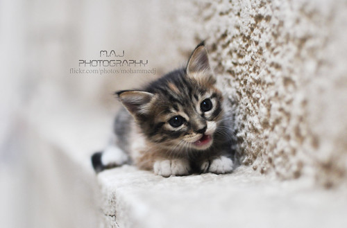 Cute cat - M.A.J photography | by M.A.J Photography