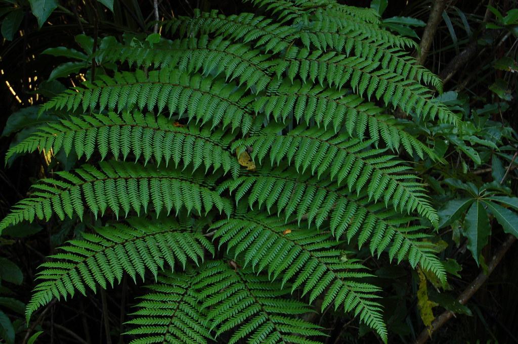 2008 Jan NZ Bridal Veil Falls 074
