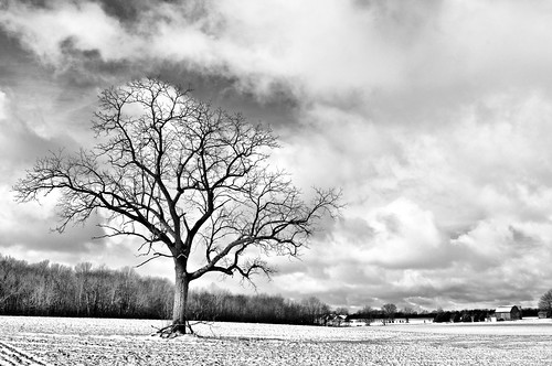 [winter tree] | by kylepost photography