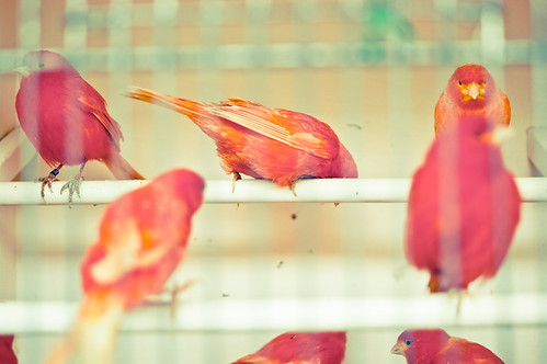 Red birds... | by __AK__