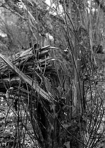 fracture en bois vert  Julien Pironin  Flickr ~ Fracture Bois Vert Poignet