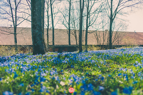 120/365 Spring Flowers | by Jussi Hellsten Photography