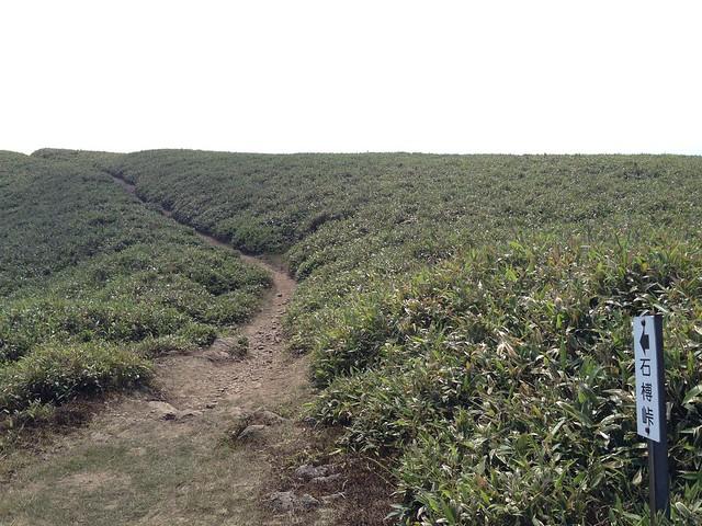 竜ヶ岳 山頂 表道