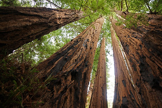 2012-02-04 02-05 Capitola, Big Basin 122 Redwoods State Park | by Allie_Caulfield