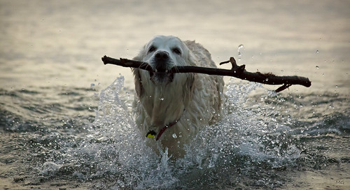 Stick Rescue... | by Joey Monk