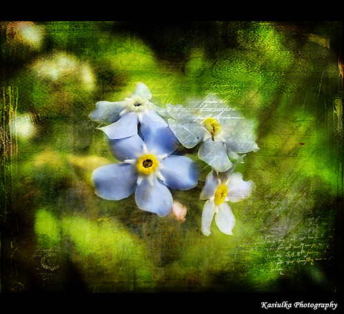 Little ones in texture | by Kasiulka Photography - off