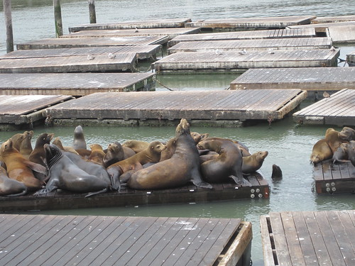 Sea lions barking at Pier 39 | by strongstuff