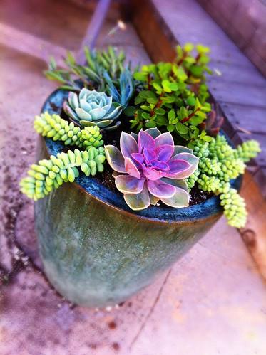 Diy mixed potted succulent garden weekend project for Diy garden studio