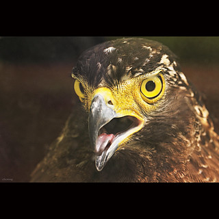 Eagle eyes | by -clicking-