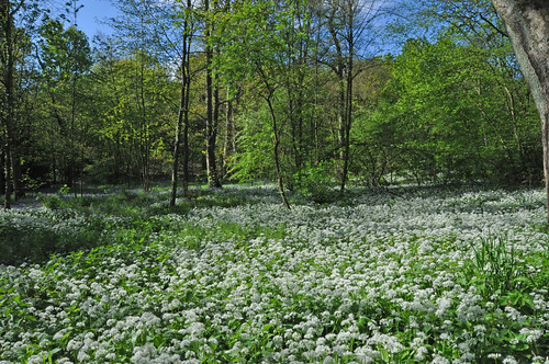 Woolley Woods, South Yorkshire 12 May 2012 | by Tim Melling