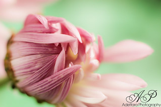 A flower cannot blossom without sunshine, and man cannot live without love.~ Max Muller | by Adettara Photography