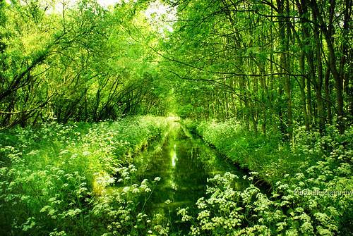 lush and green and summer at last | by kelsk