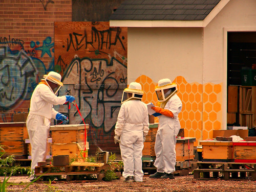 Urban Bee keeper collecting honey from hive | by GlossyEye.