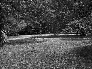 Bluebells The Lye Enys near Penryn Cornwall b&w watercoloured | by Cornishcarolin. Thank you everyone xxxx