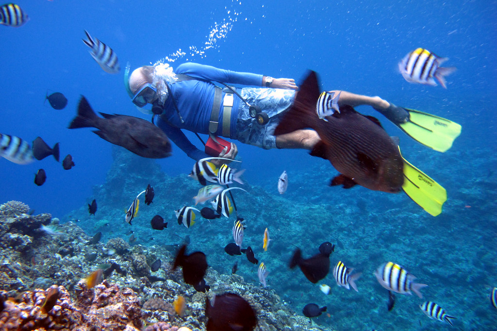 Image result for scuba diving