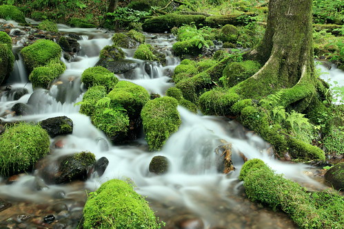 mossy stones. | by cate♪