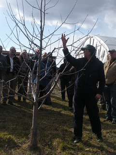 Wayne Young explains pruning and tree growth. | by NOFA Organic Land Care Program